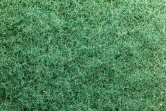 Makrobilden av en gräsplan skurar svampen fotografering för bildbyråer