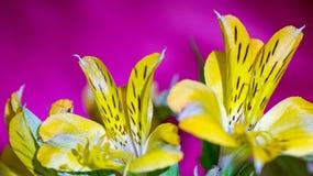 Makrobilder från blommorna av houseplants Royaltyfria Foton
