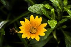 Makrobilder von Blumen lizenzfreie stockfotografie