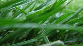 Makroblad av grönt gräs på en sommargräsmatta eller äng arkivfoton