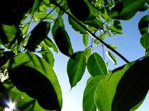 Makroblatt mit Himmel-Hintergrund Lizenzfreies Stockfoto