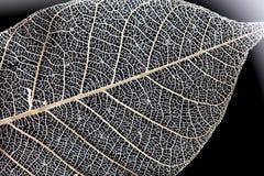 Makroblattbeschaffenheit auf schwarzem Hintergrund Lizenzfreies Stockbild