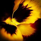 Makroblomma i guling Royaltyfria Bilder