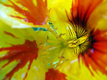 MAKROblume Stockfotos