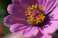 Makroblume im Sonnenlicht stockbilder
