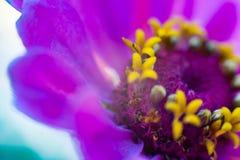 Makroblume im Sonnenlicht stockfoto