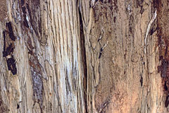 Makrodetail der hölzernen Beschaffenheitsnahaufnahme in der braunen Farbe Stockbilder