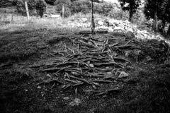 Makrodetail des alten hölzernen Schwingens befestigt zum Baum durch Seil lizenzfreies stockfoto