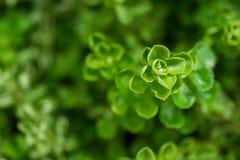 Makrodetail einer grünen tropischen Grundanlage Lizenzfreies Stockbild