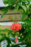 Makrodetail einer tropischen Blume Lizenzfreies Stockfoto