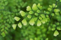 Makrodetail von grünen Blättern einer tropischen Anlage Lizenzfreies Stockfoto