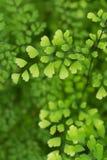 Makrodetail von grünen Blättern einer tropischen Anlage Stockfotos