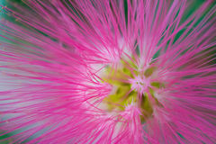 Makrodetalj av den rosa fluorescerande tropiska blomman Arkivfoton