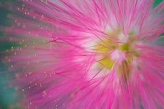 Makrodetalj av en fluorescerande rosa tropisk blomma Royaltyfria Foton