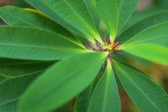 Makrodetalj av en kulör tropisk växt Royaltyfria Bilder