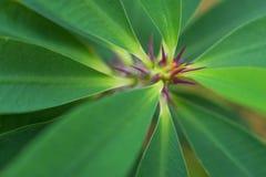 Makrodetalj av en kulör tropisk växt Arkivbild
