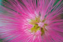 Makrodetalj av en rosa fluorescerande tropisk blomma Arkivbilder