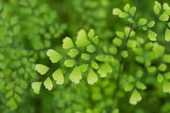 Makrodetalj av gröna blad av en tropisk växt Royaltyfri Bild