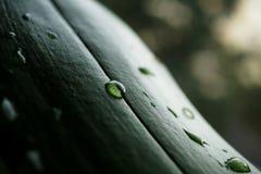 Makrodetaljen av ett vatten tappar på det gröna bladet med förstorade vita prickar som ett bakgrundssymbol av den nya och sunda n Royaltyfria Foton