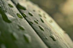 Makrodetaljen av ett vatten tappar på det gröna bladet med förstorade vita prickar som ett bakgrundssymbol av den nya och sunda n Royaltyfria Bilder