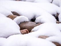Makroen av floden vaggar och tung snö Arkivfoton