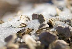 Makroen plocka svamp under snökristaller Royaltyfri Bild