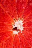 Makrofoto av den saftiga grapefrukten Arkivbild