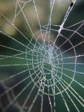 Makrofoto av en dagg dolda Spiderweb fotografering för bildbyråer