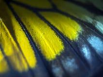 Makrofoto av en fjärilsvinge Arkivbild