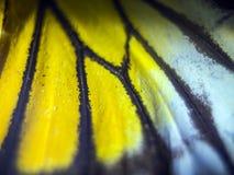 Makrofoto av en fjärilsvinge Royaltyfria Bilder