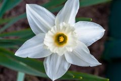 Makrofoto av en härlig vit blomma royaltyfri bild