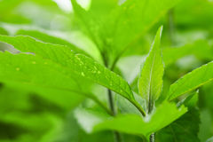 Makrofoto av nytt ljust - gräsplansidor Royaltyfria Bilder