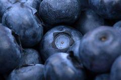 Makrofoto av organiska och söta blåbär som en bakgrund Healthful och nya bär för efterrätter eller smoothies Royaltyfria Foton