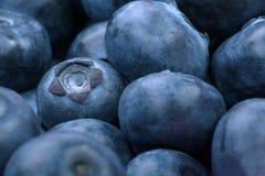 Makrofoto av organiska och söta blåbär som en bakgrund Healthful och nya bär för efterrätter eller smoothies Royaltyfri Foto