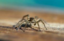 Makrofoto av spindeln royaltyfria foton