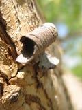 Makrofoto av trä- eller trädskälltextur Fotografering för Bildbyråer