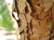 Makrofoto av trä- eller trädskälltextur Arkivbild