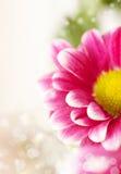 Makrofoto der Blume Lizenzfreie Stockbilder