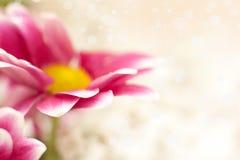 Makrofoto der Blume Lizenzfreies Stockfoto