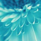 Makrofoto der schönen Blumenblätter der Kornblume Lizenzfreie Stockbilder