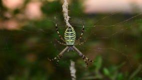 Makrofoto der Spinne Stockbilder