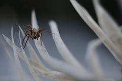 Makrofoto der Spinne auf Blätter von Kakteen lizenzfreie stockfotos