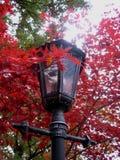 Makrofoto der Straßenlaternebeleuchtung, bunter Ahornherbstlaub in den roten Farben für Gebrauch im Design und Foto kaufen Stockbilder