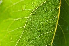 Makrofoto des grünen Blattes mit Wasser fällt Lizenzfreie Stockfotos
