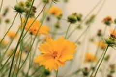 Makrofoto einer Blume lizenzfreie stockfotos
