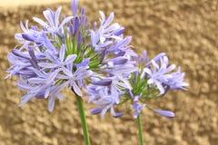 Makrofoto einer Blume stockbilder