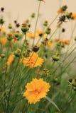 Makrofoto einer Blume lizenzfreies stockbild