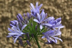Makrofoto einer Blume lizenzfreies stockfoto