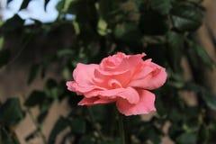 Makrofoto einer Blume lizenzfreie stockfotografie