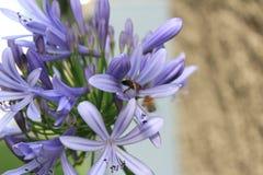 Makrofoto einer Blume stockfoto